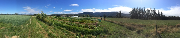 80 acres of beautiful land will soon hold the yummiest and prettiest veggies, fruits, flowers in all of the land.